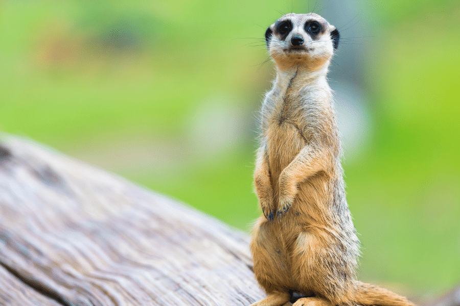 The Ultimate List of Things to do in Conwy, North Wales - The Welsh Mountain Zoo, Colwyn Bay, Conwy LL28 5UY